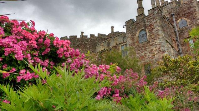 d Castle Rose