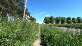 Path nettles