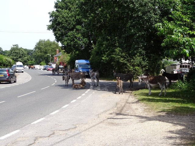 Pilley Donkeys